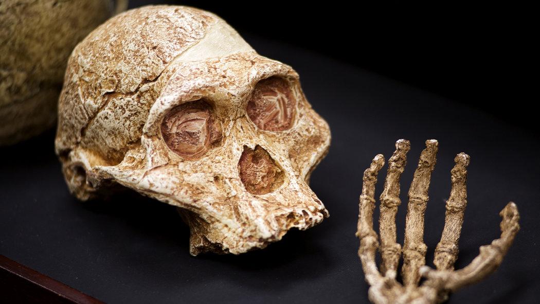 Image result for images of ancestor